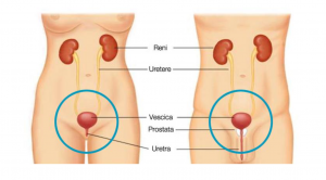 dolore alla prostata quando si corre la